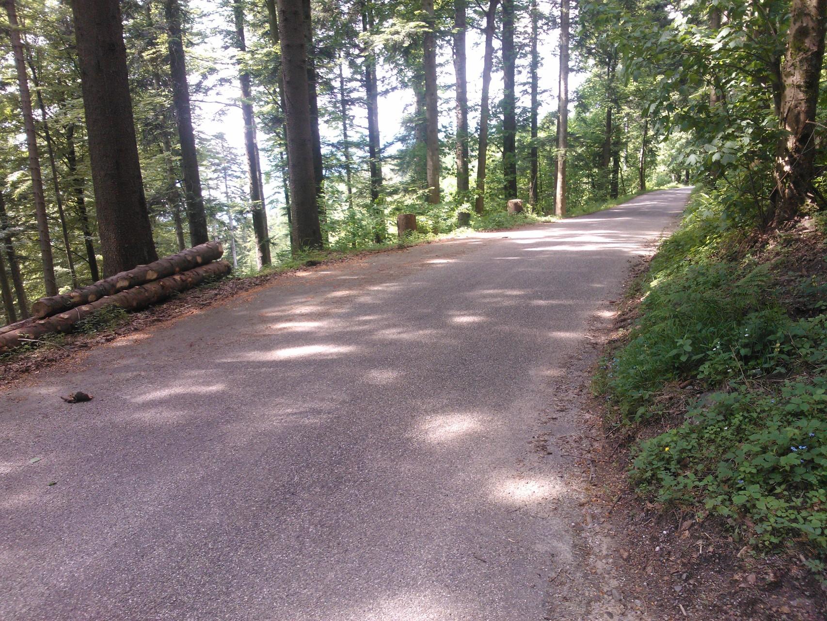 Von Hintertal Richtung Brandenkopf 4 km Naturstraße