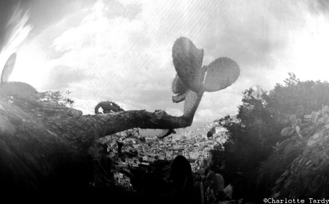 Vue sur Chaouen avec cactus au premier plan (réalisée lors du stage sténopé en avril 2018)