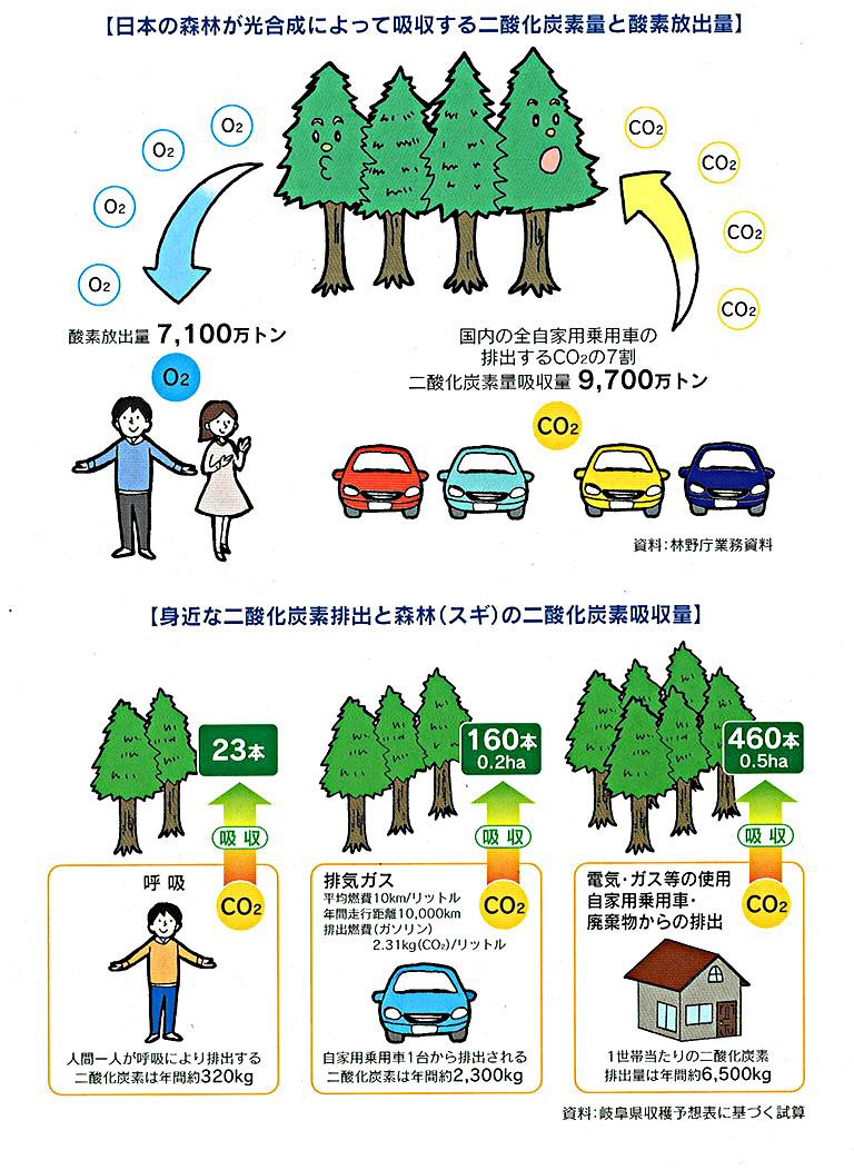 木は排出するCO2を吸収してくれます