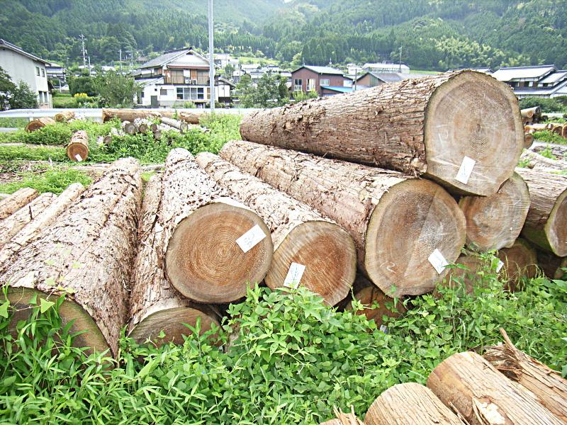 岡山県北の製材市場から製材所に入荷した丸太