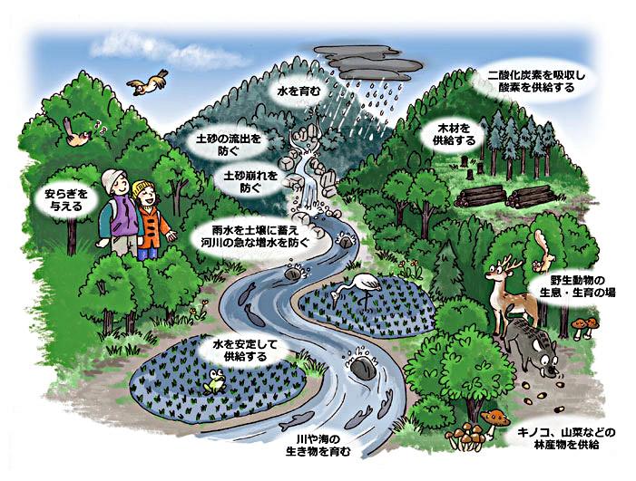 「木を使う」循環ができると、日本のふるさとが守れます