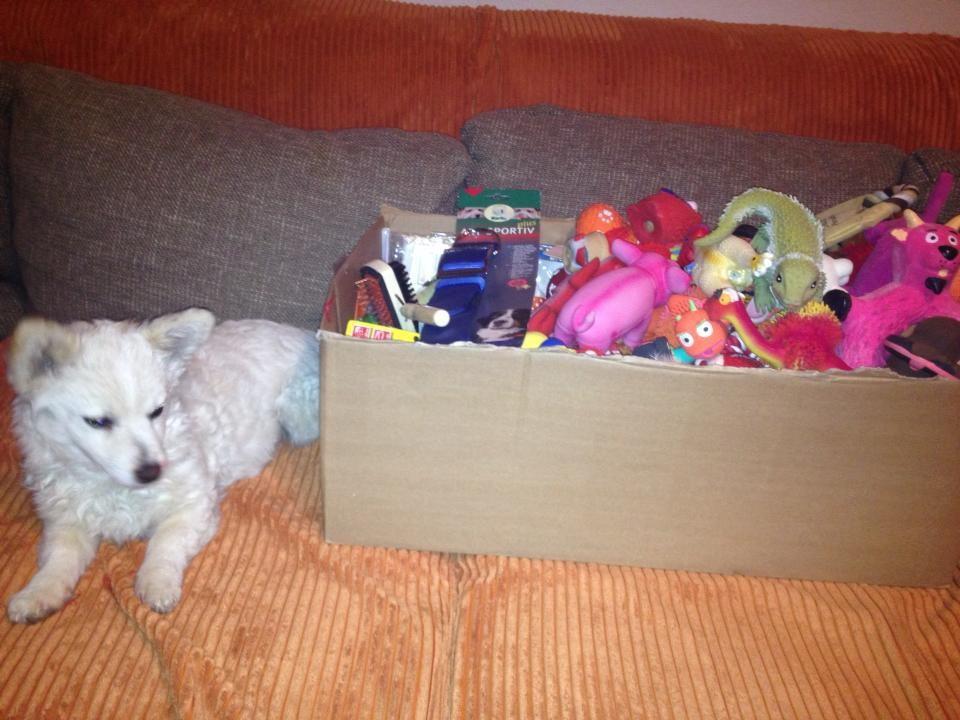 Dolly paßt auf die Spielzeuge auf..