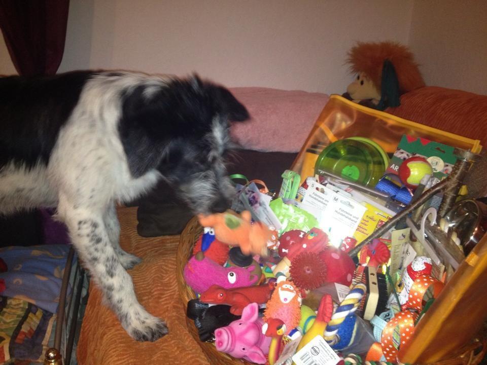 ... und Josie sucht sich ein Spielzeug aus