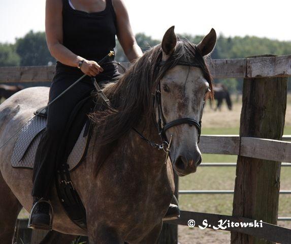 07.08.2010 - Momo und Svea bei der Arbeit