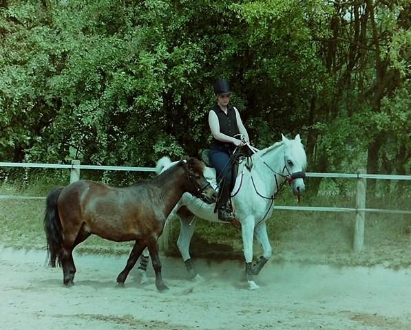 FRT 1999 Hof Larsson, Handpferdereiten