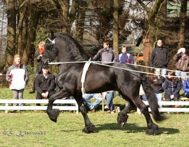 Karel 370 / Friese