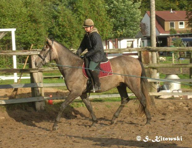 16.10.2008 Momo und Dagmar noch an der Longe