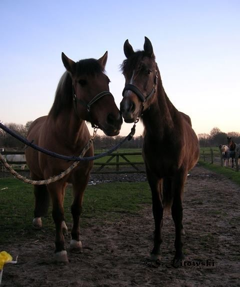 10.12.2006 - Max und Momo