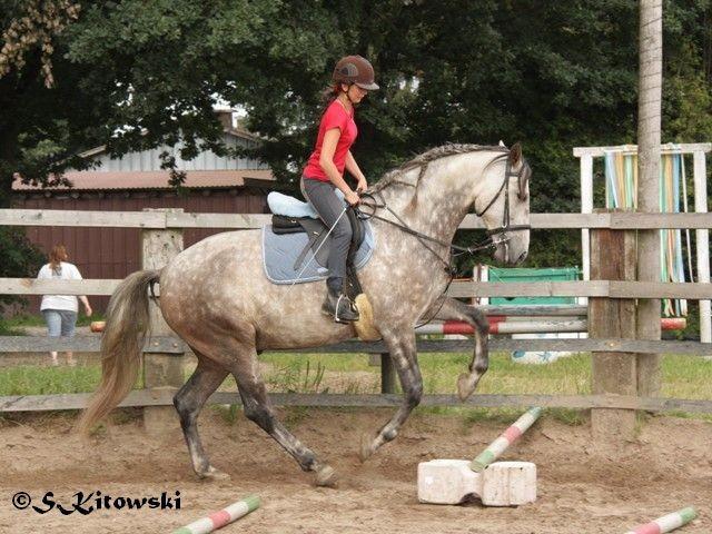 30.07.2011 - Momo´s erste Hüpfer unterm Reiter