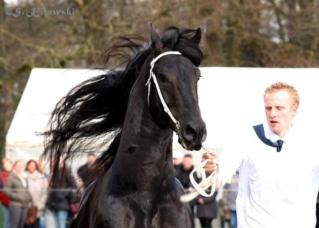 Wimer 461 / Friese
