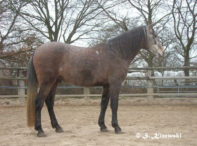 31.01.2009 - Momo im Winterplüsch