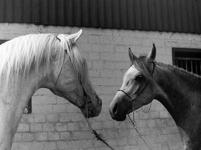 Mutabor und Marwan, ca. 1989