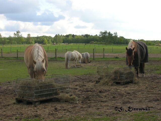 29.05.2006 - Abendheu mit seiner kleinen Herde