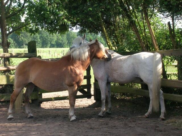 Mutabor und Heini beim Fellchenkraueln
