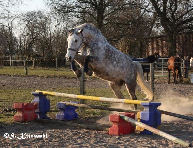 09.03.2014 - Freilauf / Freispringen