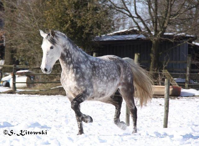 23.03.2013 - Toben im Schnee