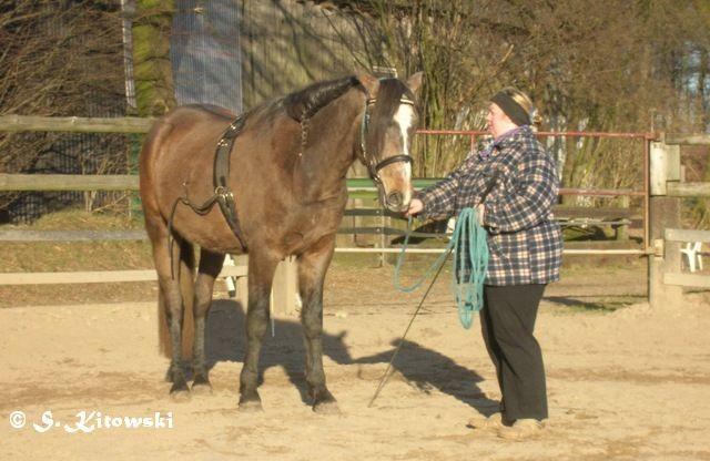 16.02.2008 Momo bei der Roundpen-Arbeit