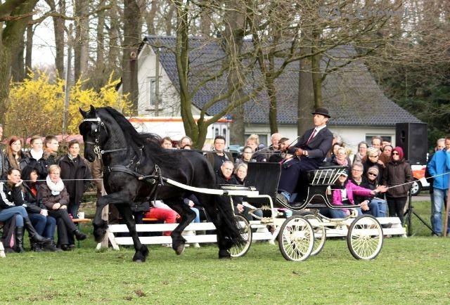 Wylster 463 Sport / Friese
