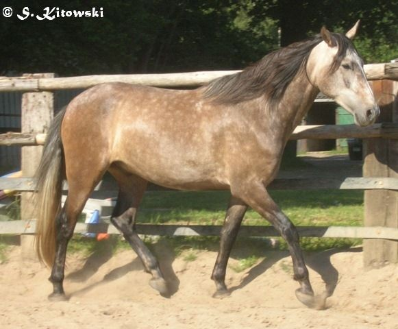 24.06.2009 - Momo im Roundpen