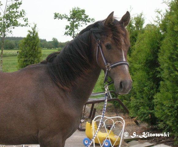 14.06.2006 - 1 Jahr alt, noch bei seiner Züchterin
