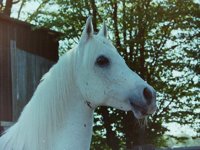 Mutabor ca. 1998