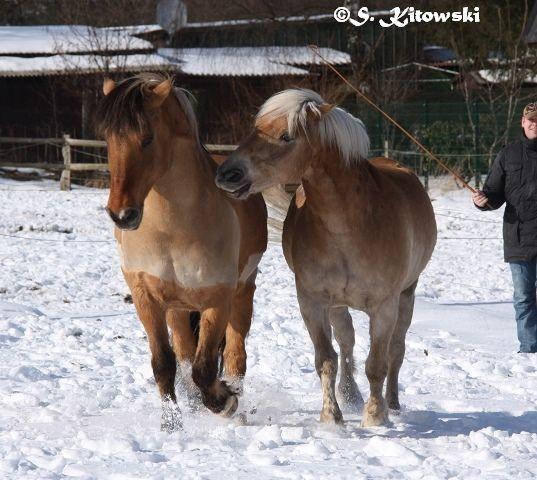 23.03.2013 Spaß im Schnee