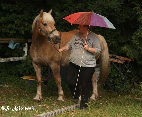 Vorwärts mit Regenschirm
