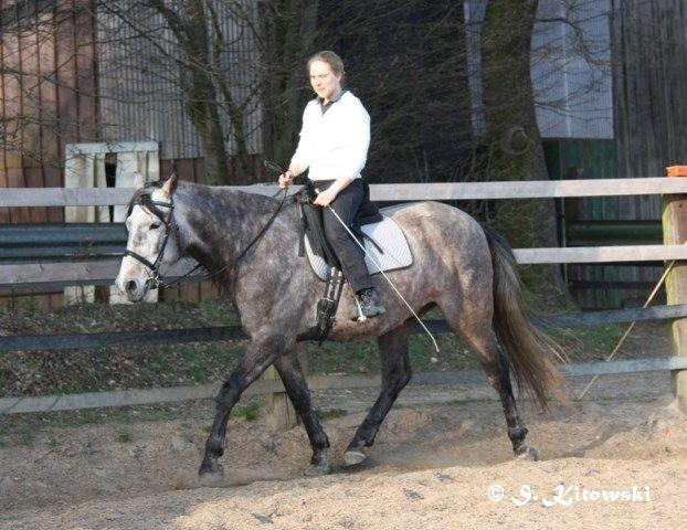 07.04.2010 - Momo und Svea bei der Arbeit