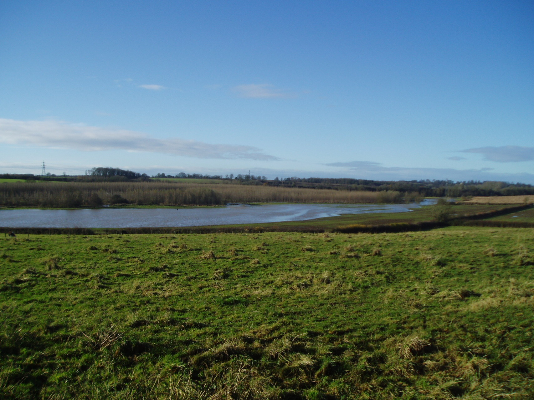 Flooded meadows