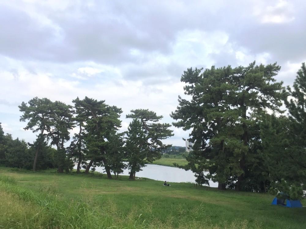 Five Pine Trees along Tama River Tokyo Komae