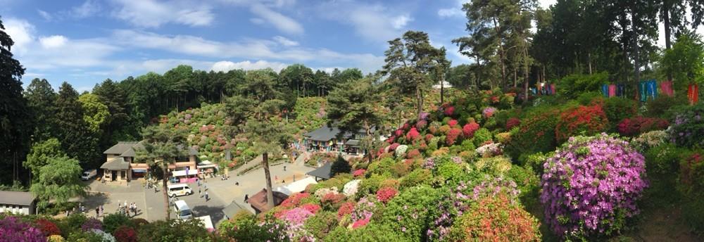 Azalea garden at Shiofune Kannon Temple in May Tokyo Ome