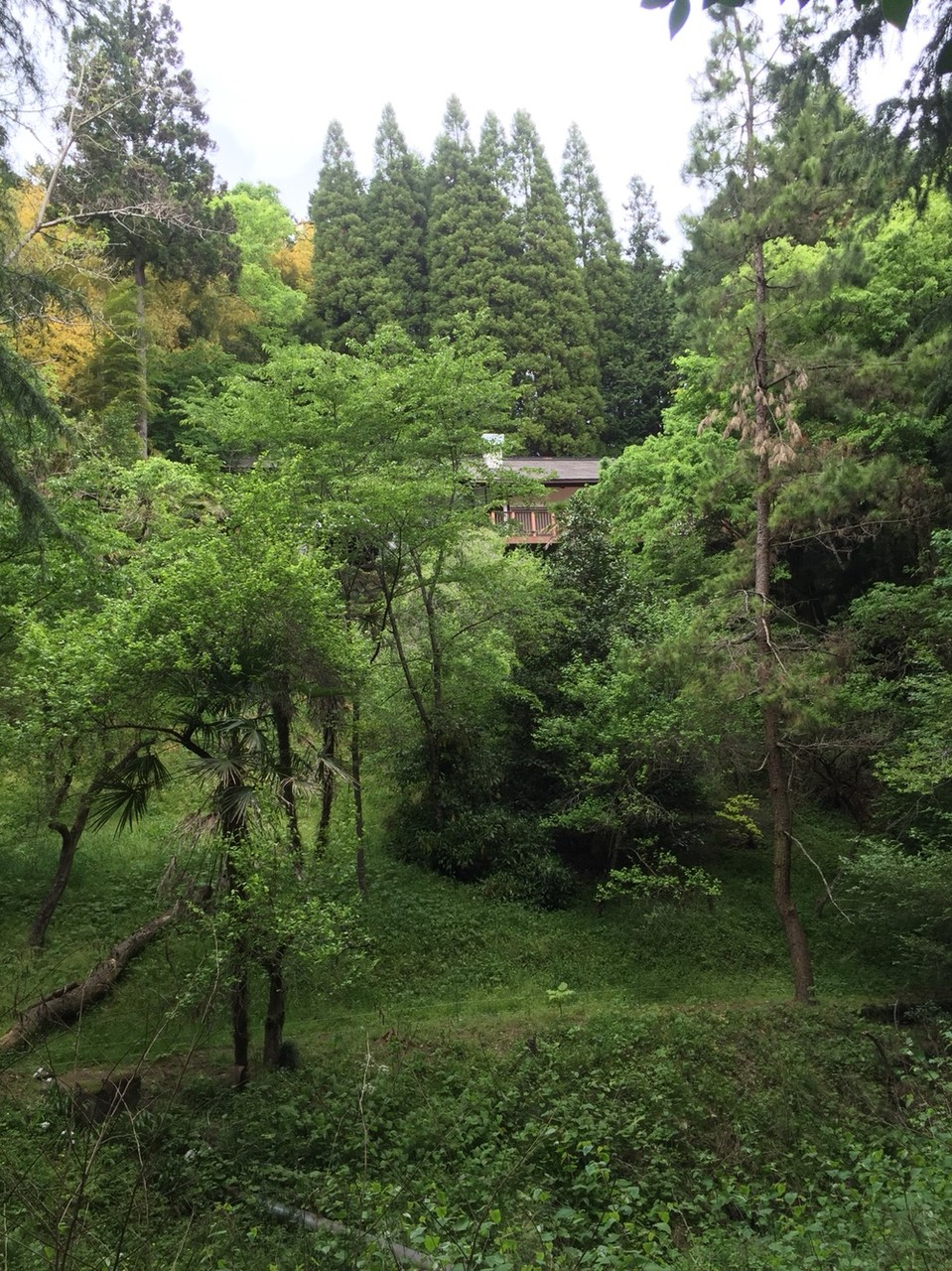 Garden at Hinodesanso Villa Tokyo Hinode