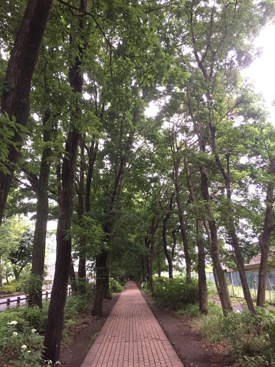 Red Brick promenade on Nobidomeyosui River Tokyo Kodaira