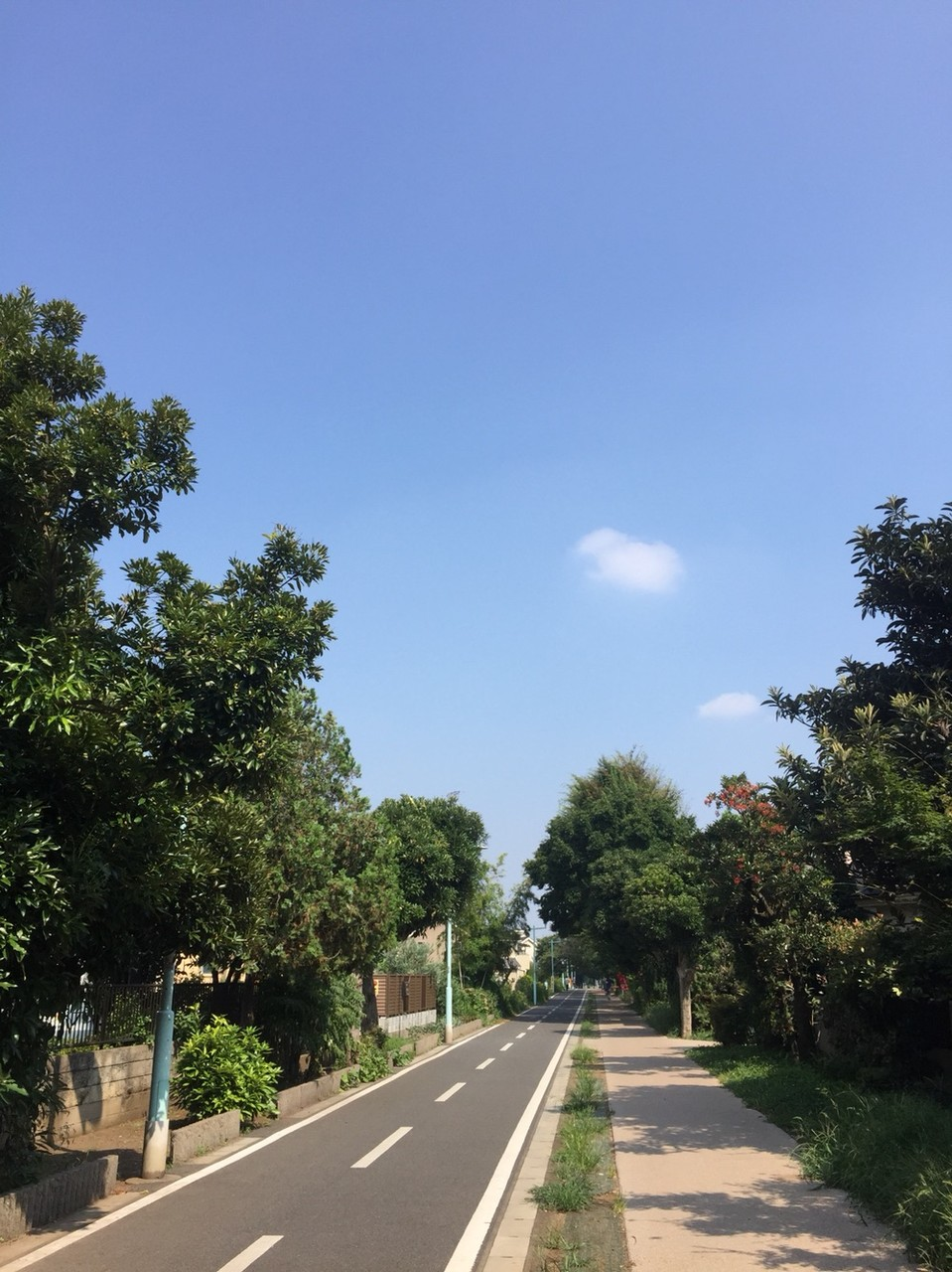 LakeTama Cycling Road Tokyo Kodaira