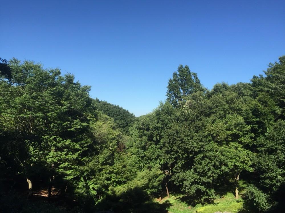 Nature Forest at Inagi Central Park Tokyo Inagi
