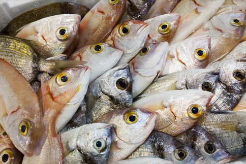 Il nostro freschissimo pescato