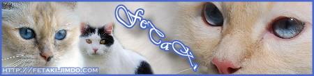 www.fetaki.jimdo.com