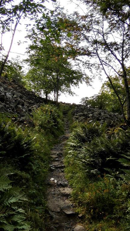 """Wanderweg hoch zum """"Rauher Kulm"""""""