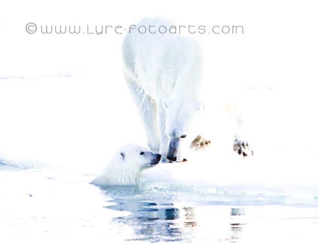 2009.08.27  -  Canada, NW-Passage - Eisbär  (Polarbear)
