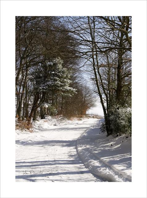 Sous la neige - Toile 35x22