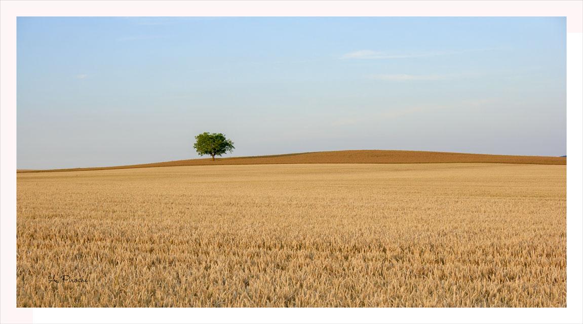 Champ de blé - Toile 80x45