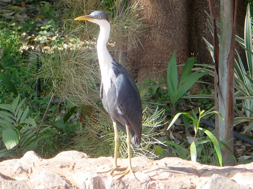 Fischweiher bei Jabirou