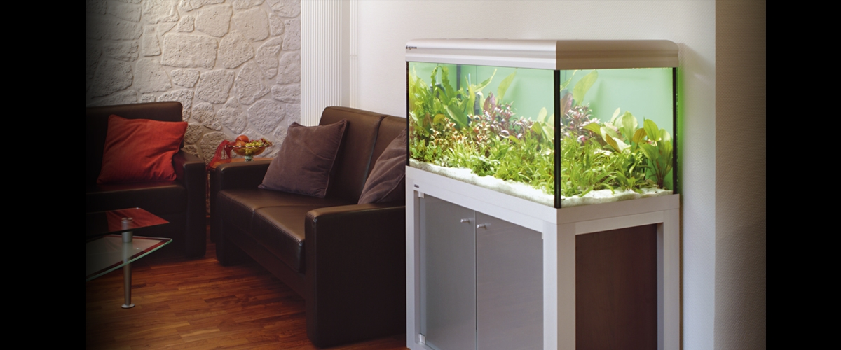 exclusive aquarien aquarium4rent mieten kaufen freuen. Black Bedroom Furniture Sets. Home Design Ideas