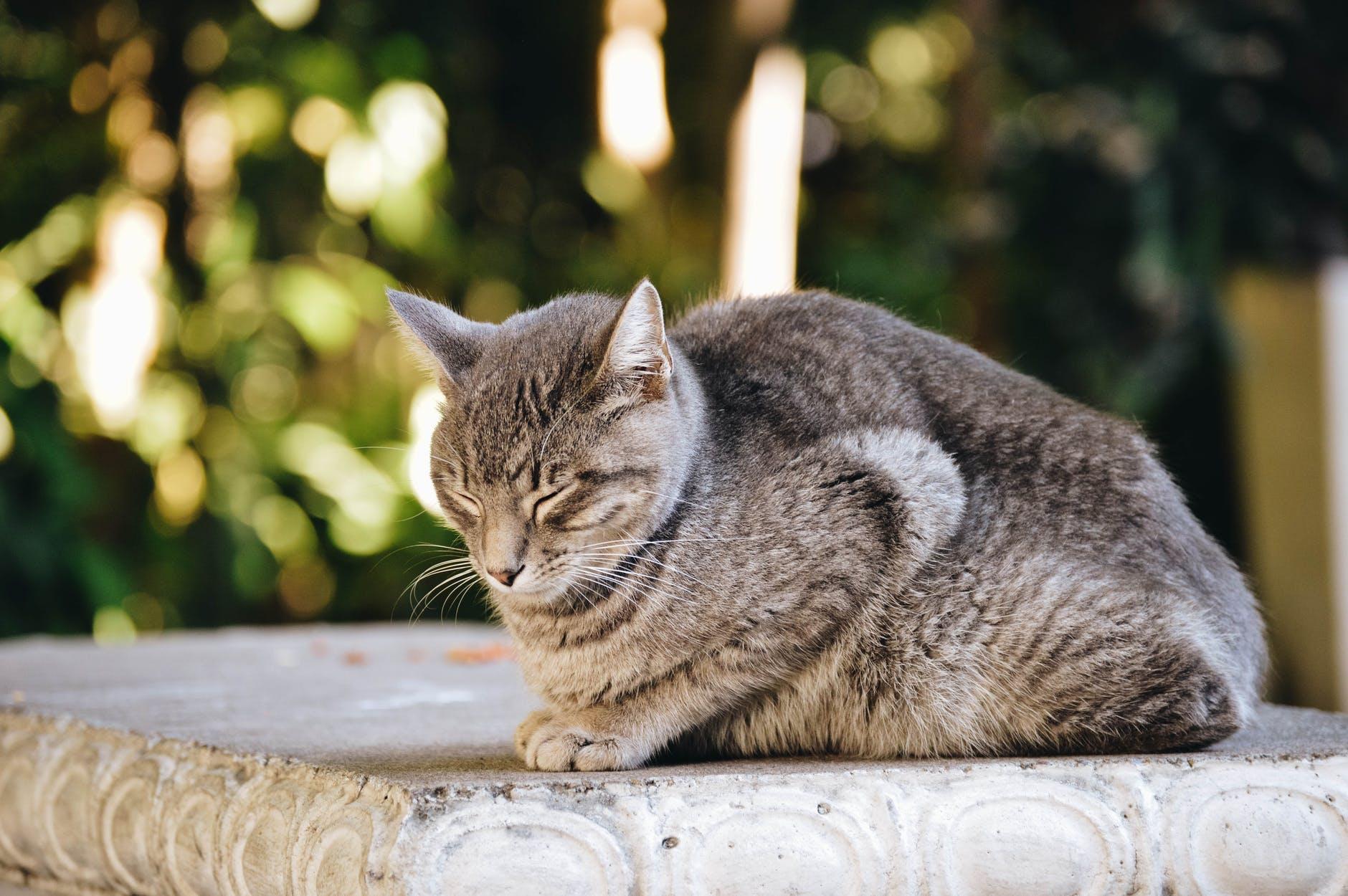 dieta per pancreatite gatto