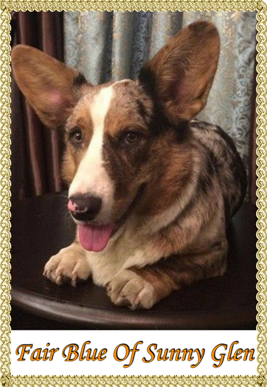 Файеру 9 месяцев