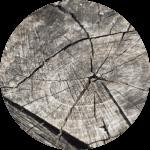 Holz als Baumaterial