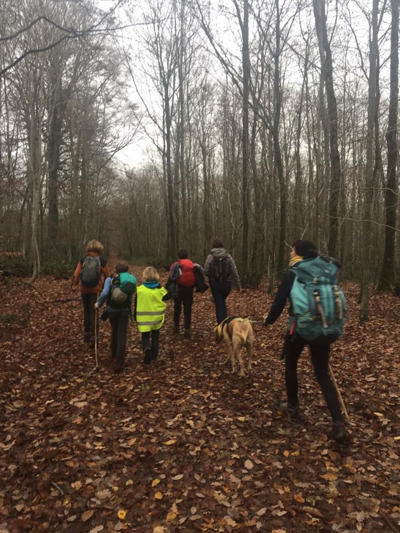 En avant dans la forêt de Fontainebleau !