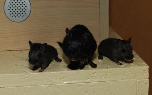 Blacky mit seinen Söhnen Flori und Keks