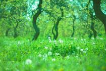春のあたたかい心で【心の対応】