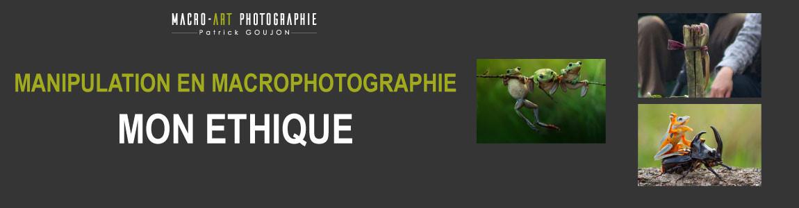 macrophotographie mon ethique sur la manipulation des insectes avec le blog patrick goujon photographe macro photo nature animalier